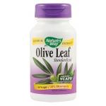 Olive Leaf - frunze maslin