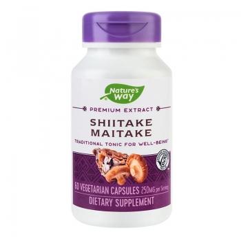Shiitake - Maitake